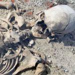 Skelett-fran-Ajvide